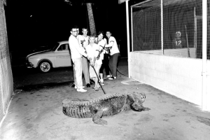 Man's Best Friend – a Gator?