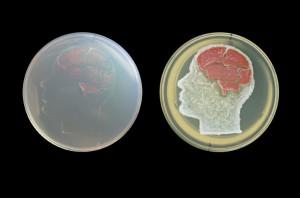bacteria2