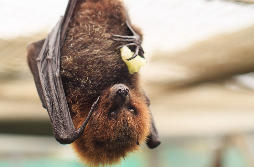 Fantastic Bats and Where to Find Them - HOME: Living in Greater ...