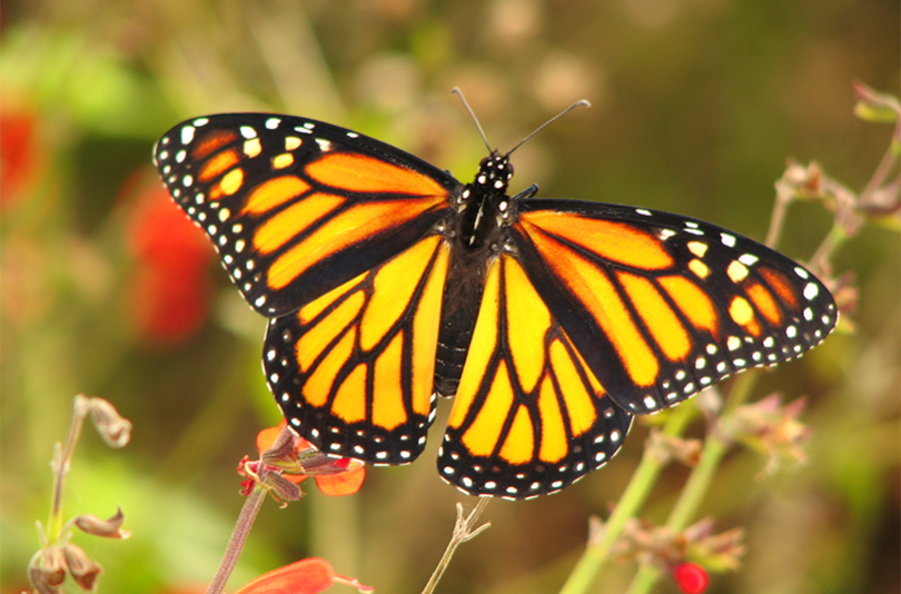 Create A Butterfly Garden For Your Home Or School Home Living